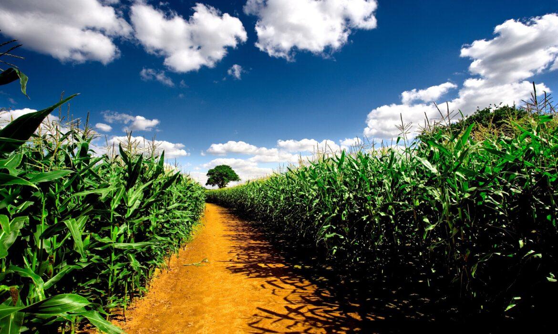 Biocombustíveis: Biodevastação, Fome & Falsos Créditos de Carbono